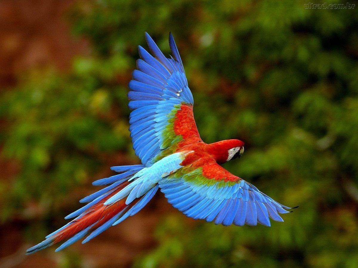 Contenção, Manejo e Coleta de material biológico de aves silvestres