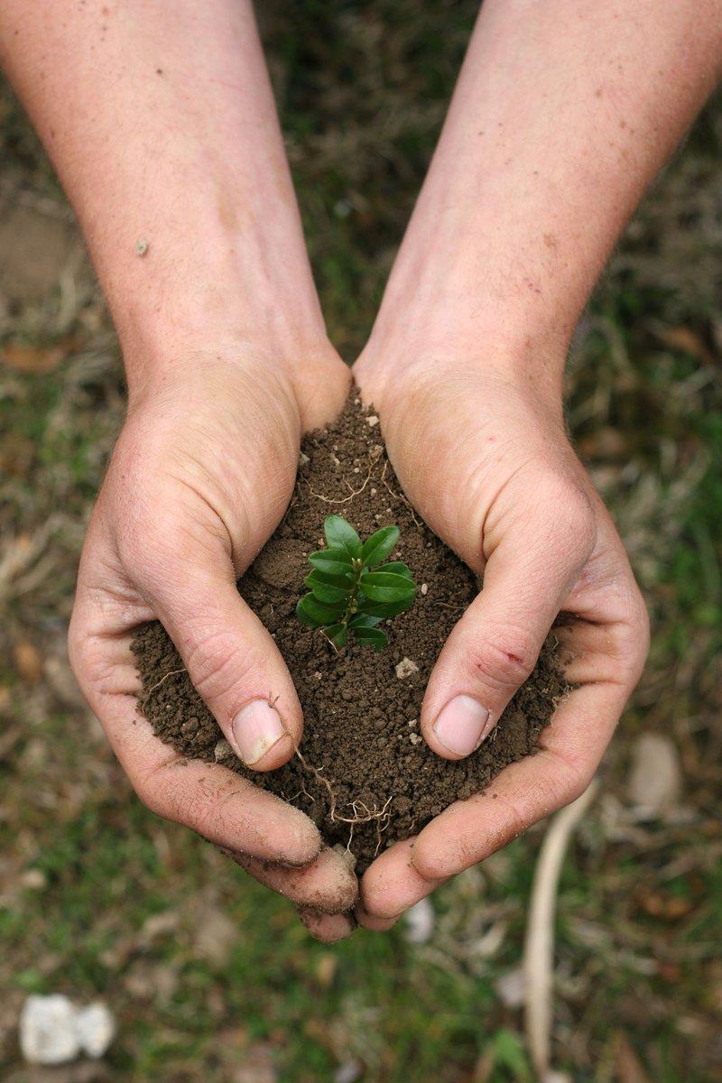 Interpretação de análises de solos